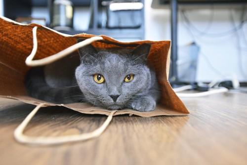 紙袋の中でくつろぐグレーの猫
