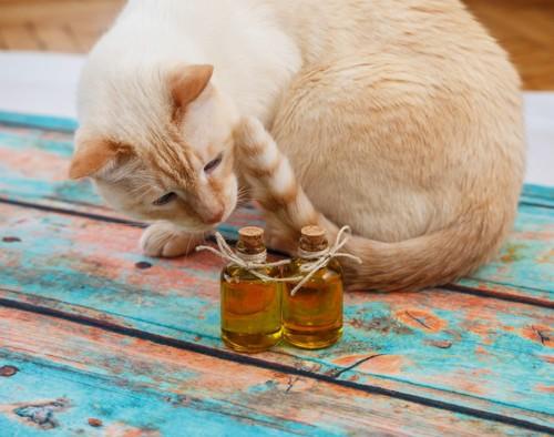 オリーブオイルの瓶と猫
