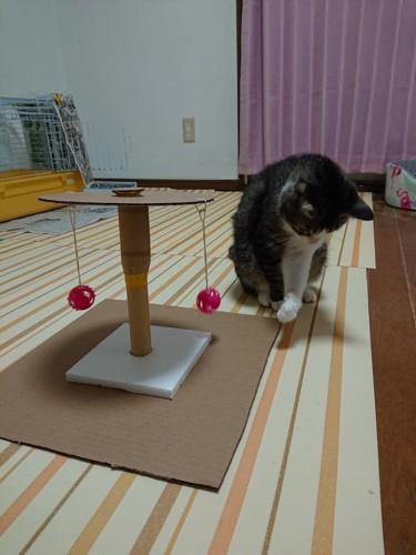 おもちゃに飽きる猫
