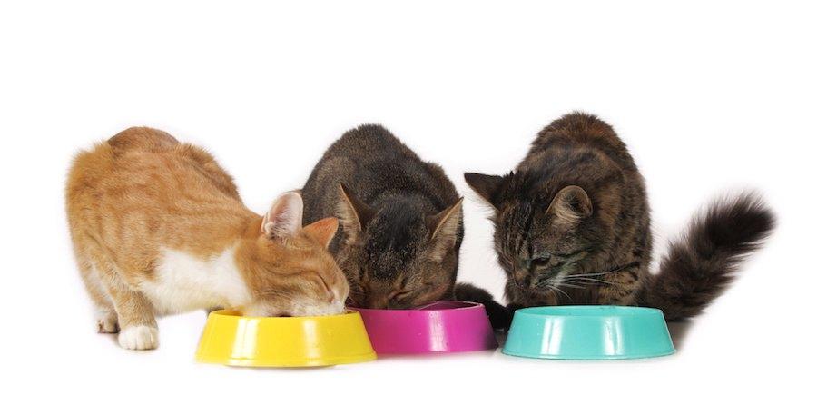 それぞれのフードボウルで餌を食べる3匹の猫