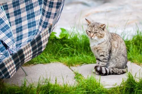 しっぽを体に巻いて座る猫