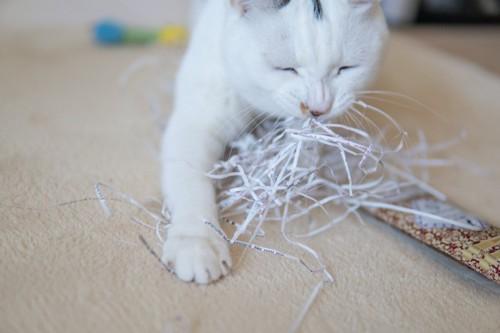 イタズラをする猫