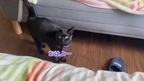 立って見上げる猫
