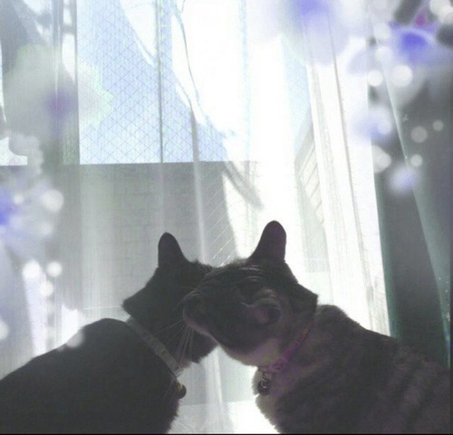 窓の前で顔を寄せ合う兄妹猫