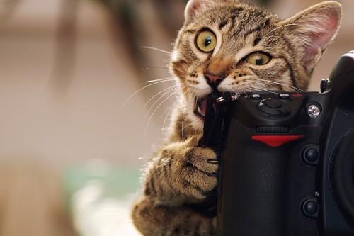カメラを囓る子猫