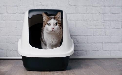 トイレをした猫