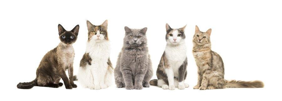 いろいろな猫種
