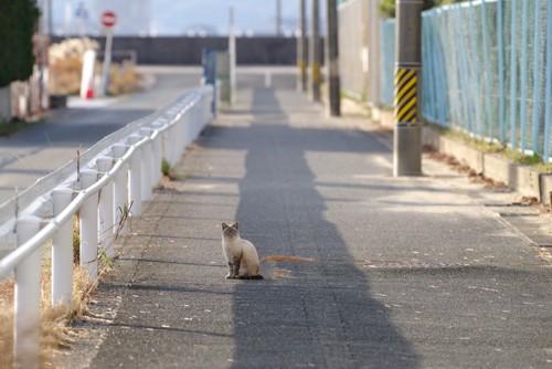 歩道に座ってこちらを見る猫
