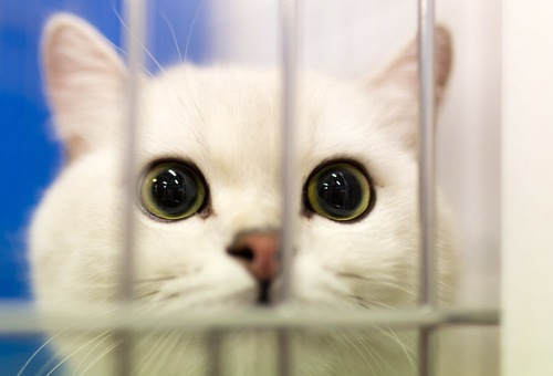ケージから見つめる猫
