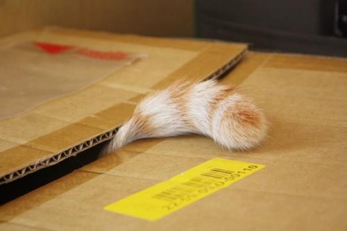 箱から出ている猫の尻尾