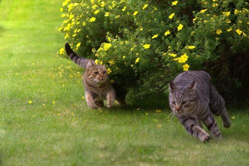 逃げる猫達