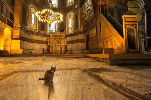 教会にいる猫