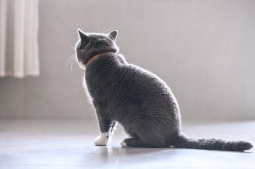 おすわりをする猫の後ろ姿