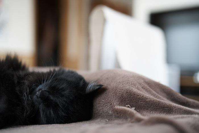 目をつむっている黒猫