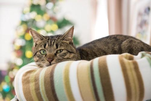じっとしている猫