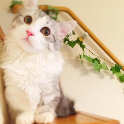 アップロード写真8 子猫時代階段
