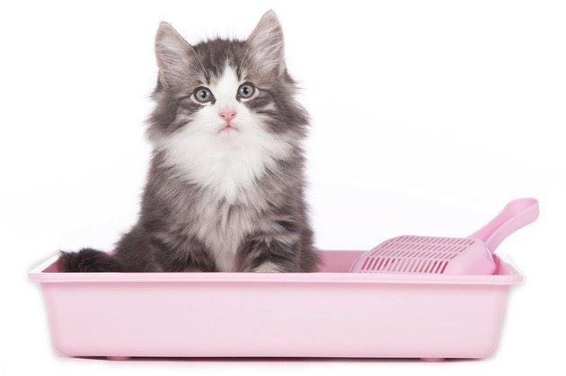 ピンクの猫トイレで座るおしっこに血が混じる猫