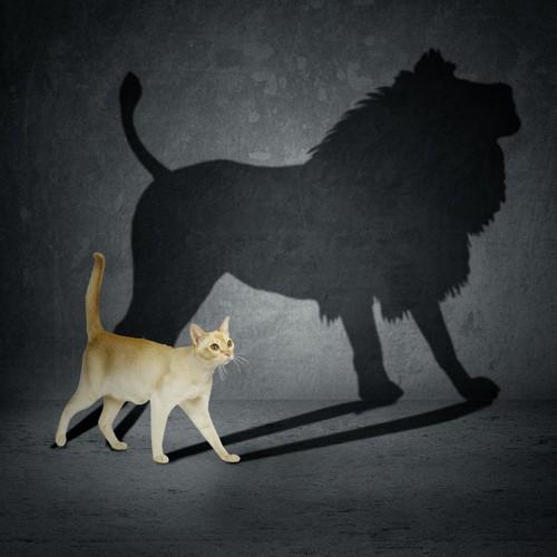猫とライオン