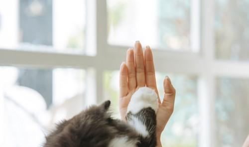 人の手にハイタッチする猫の手