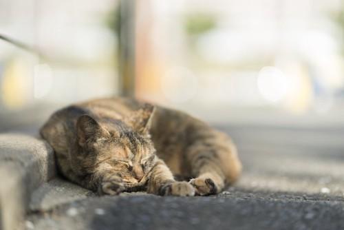丸くなって昼寝をする野良猫