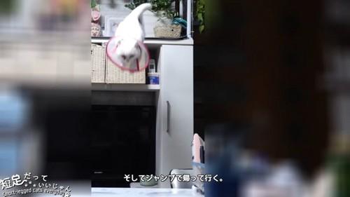 飛び降りる猫