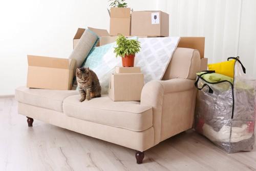 荷物に囲まれる猫