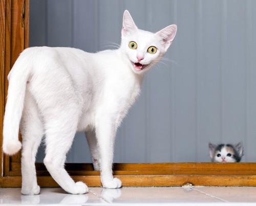 子猫を見て不機嫌な白猫