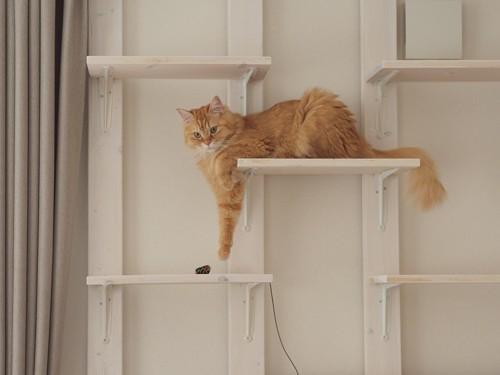キャットウォークを歩く猫