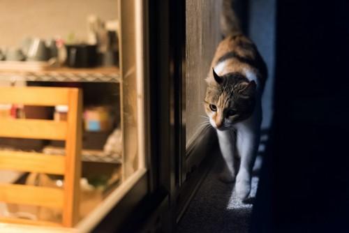 夜に家の窓際を歩いている猫