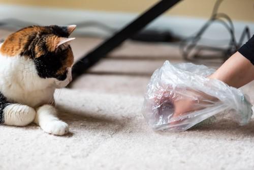 ゴミを拾う飼い主の手を見つめる猫