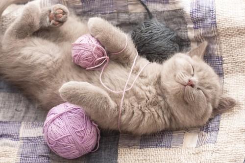 毛糸にからまって仰向けで寝ている猫