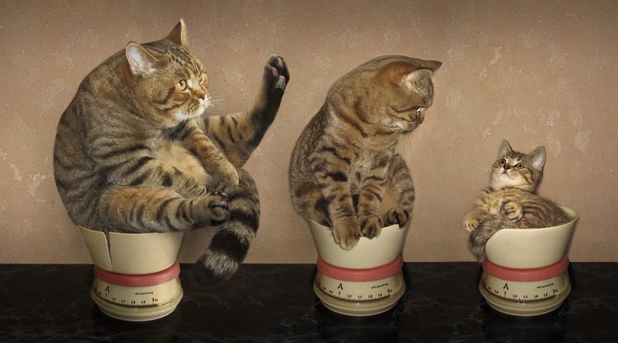 体重計にのっている猫