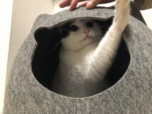 猫ハウスで遊ぶ猫