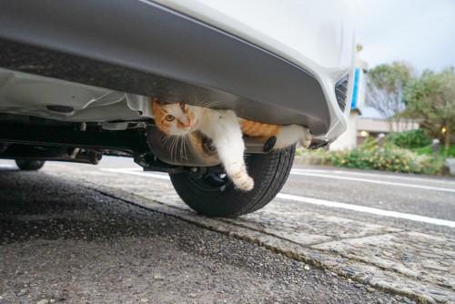 車に潜む猫