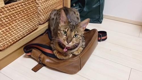 かばんの上に座る猫