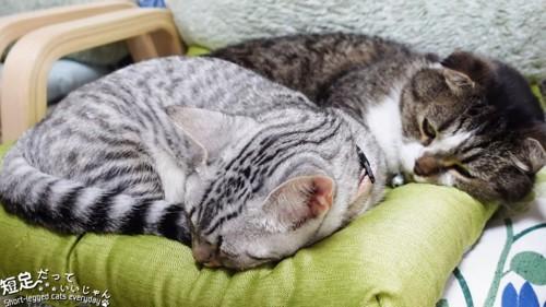緑色のクッショの上にいる2匹の猫
