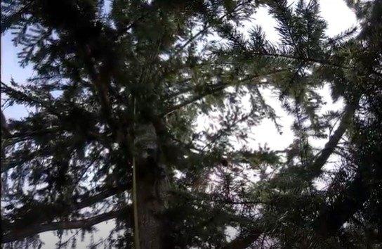 猫のトア―が立ち往生する木