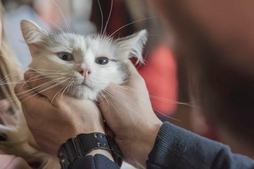 触られて不機嫌そうな顔をした猫