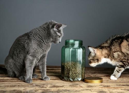 フードの入った瓶を覗く2匹の猫