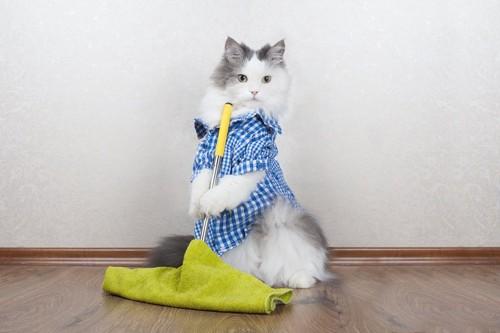自分でお掃除している猫
