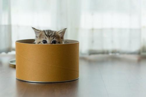 筒から顔を出す猫