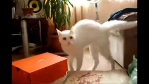 何かをみる猫