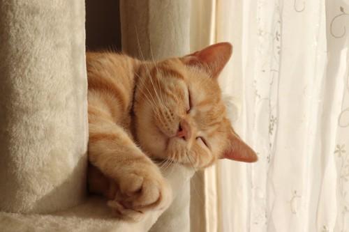 本気寝の猫