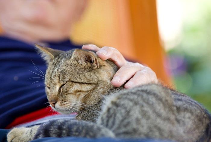 抱かれて目を瞑る猫