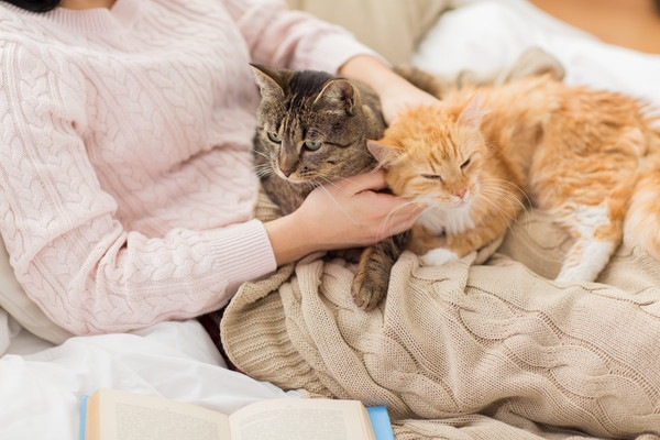 二匹の猫と飼い主