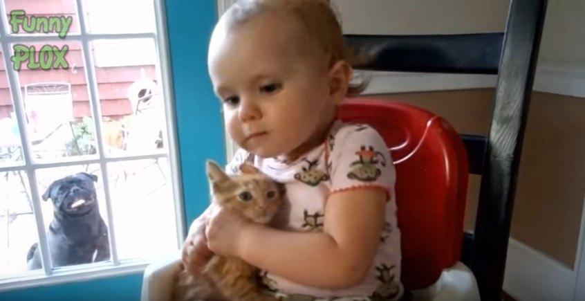 子猫を抱く幼児