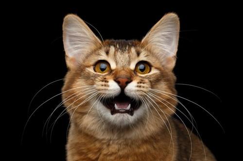 要求を伝える猫