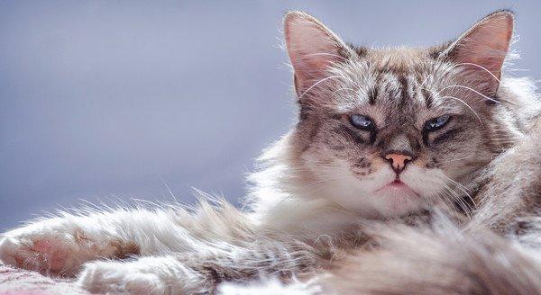むすっとした顔の猫