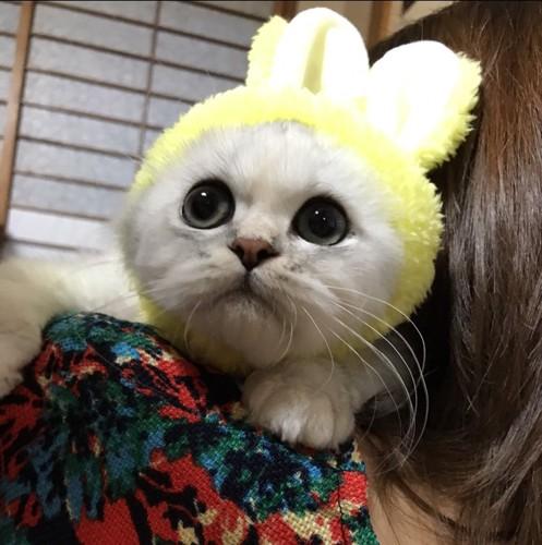されるがままの猫