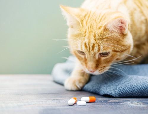 錠剤の薬を見つめる茶トラ猫
